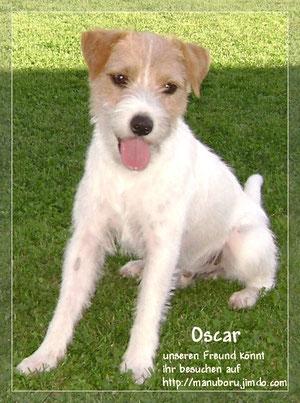 Unser quirliger Freund Oscar Petterson, geb. 25.02.2008 - NEUE HP: www.power-parson-oscar.ch