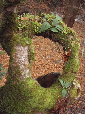 トチノキの織り成す造形。息づくリース。