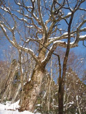 白色の眩しい森で