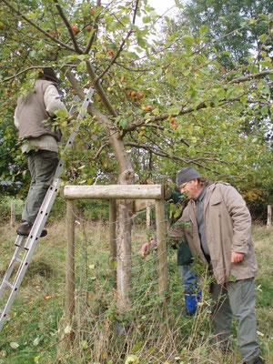 """Obstbaumpflege - Obstwiese """"Schwarzes Stück"""" - Herbst 2011"""