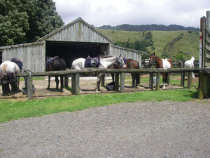 der Stall in Rotorua