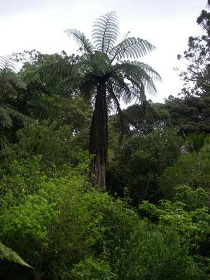 im Puketi Kauri Forest