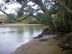 am Waitangi River, neben dem Track
