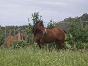 Savannah auf der Farm
