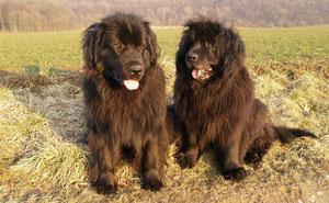Teddy Sue mit 1 Jahr und Doreen mit 11 Jahren