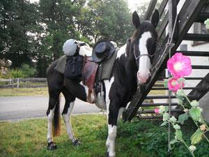 Maries neues Pferd