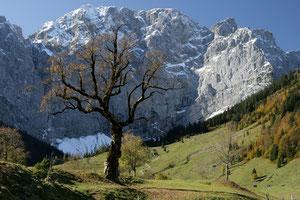 09. September 2012 - Bild von Albert Stoehr, mit dem Kommentar: wie der Name schon sagt > Berg Ahorn <