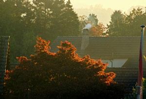 23. Sept ember 2013 - Dies ist ein Herbsttag, wie ich keinen sah! Die Luft ist still, als atmete man kaum, und dennoch fallen raschelnd, fern und nah, die schönsten Früchte ab von jedem Baum. (Friedrich Hebbel)