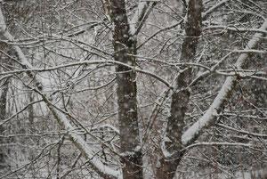 03. Februar 2013 - Wenn der Horizont fehlt, redet man vom Wetter