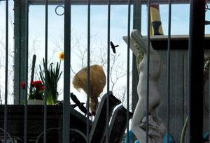 05. März 2013 - Früghlingserwachen auf dem Balkon