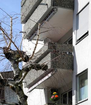 22. März 2013 - Beton und Natur