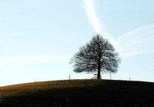 29. Februar 2012 - Stolz und einsam