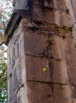 21. Oktober 2012 - Mauerblümchen