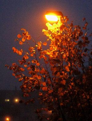 20. November 2013 - Morgen früh im Spätherbst