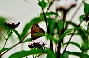10. August 2013 - Leben ist nicht genug, sagte der Schmetterling. Sonnenschein, Freiheit und eine kleine Blume gehören auch dazu (Hans Christian Andersen)