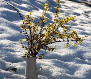26. Januar 2013 - Natur in der Natur