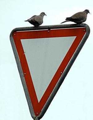 11. Mai 2013 - Achtung Tauben