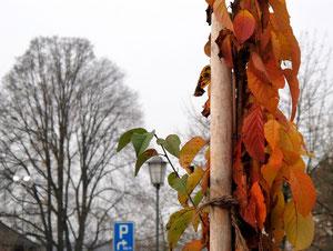 23. November 2012 - Farbtupfer