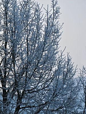 05. Dezember 2013 - Kälte ist auch sichtbar !
