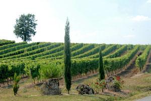 22. August 2012 - Stein und Wein