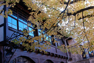 20. Oktober 2012 - Goldener Herbst