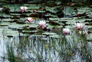 24. Juni 2012 - Nicht von Monet