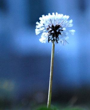 20. September 2012 - Das blaue Wunder