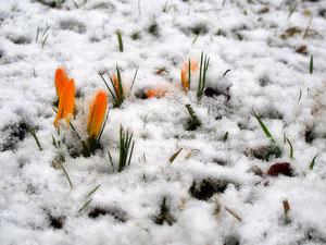 14. März 2013 - Und dräut der Winter noch so sehr.....