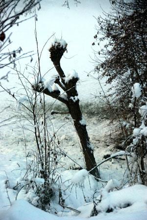 Schnee, Baumstrunk