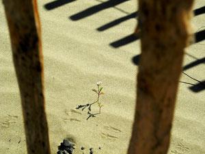 08. Juli 2013 . Lebenszeichen im Sand