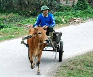 18. Februar 2013 - Auf ins Reisfeld oder Sonntagsspaziergang in Vietnam