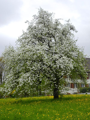 02. Mai 2013 - Der Frühling ist doch gekommen !