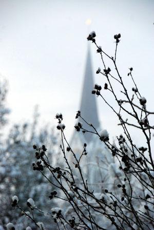 21. Januar 2013 - Der Frühling kommt bestimmt