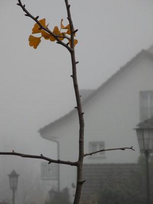 13. November 2013 - Herbstresten
