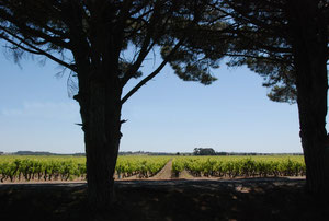 19. Mai 2012 - Reben im Languedoc