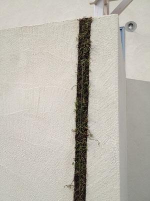 一部分の壁面緑化