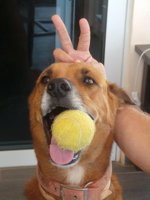 Kiko, Wachhund Nummer 1 - Verrückt nach seinen Tennisbällen