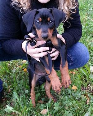 Mailo (Felix vom Sylbachtal) 10 Wochen alt ;-))
