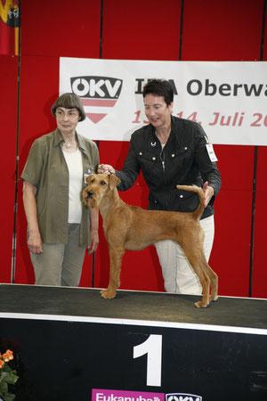 CACIB Oberwart / Österreich : 1. Platz der FCI - Gruppe III