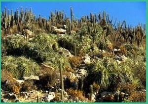 Habitat Chinchilla salvaje. Imagen extraida de: http://www.zgap.de/ChinchillaEN.html