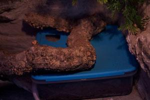 Eiablagebehälter, durchsichtig und mit Einschlupfloch