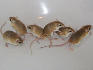 Grace, Sammy, Mini, Milli, Lexi und Sky