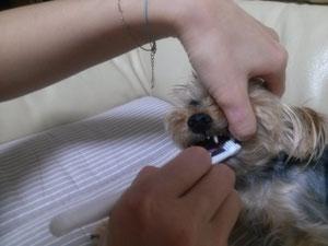 キコちゃんの歯磨き