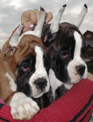 Жемчужина с сестрой Жаклин ( 3 мес)