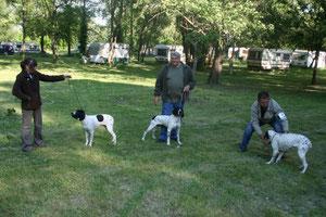 Lot d'élevage 2010, Cardet