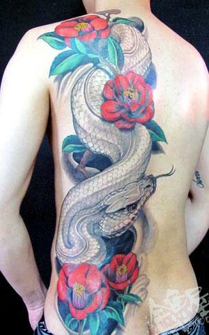白蛇 椿 カラー 背中 大蛇