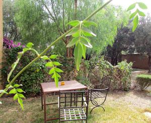 jardin privé chambre d'hotes twin Muscade au Riad, maison d'hotes le Jardind es Epices à taroudant, Maroc