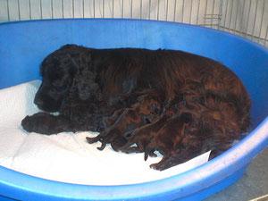 cuccioli e mamma al 3 giorno