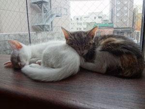 左)マリコ           右)ビワちゃんです
