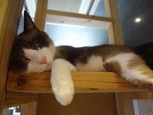 一人で寝る事もあります。 キャラメルです。